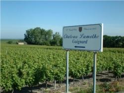 vignoble Sauternes 1