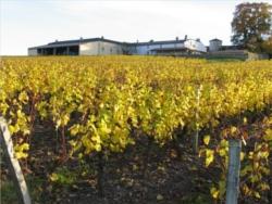 vignoble Sauternes 2