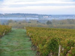 vignoble Sauternes 4