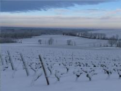 vignoble Sauternes 6